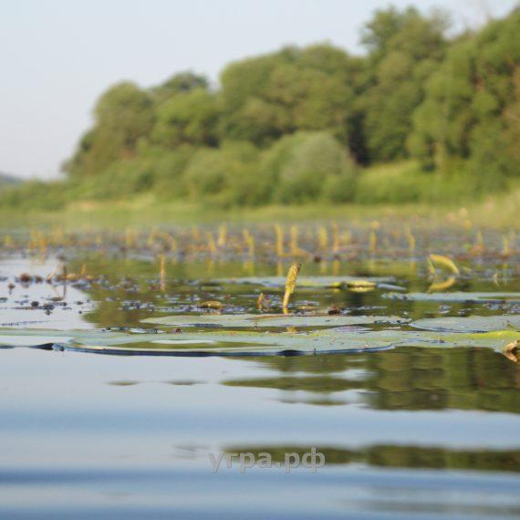 Вода. Вечер на реке Угра